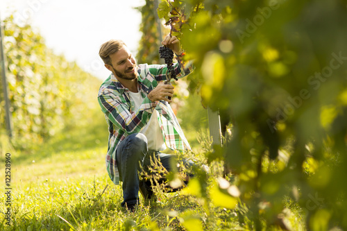 Fotografia  Man in a vineyard