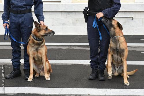 Cuadros en Lienzo chien gendarme