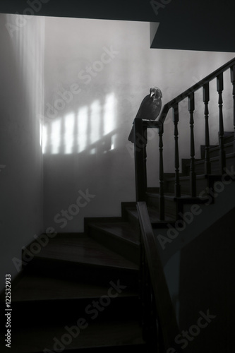 In de dag Trappen Spooky and surreal stairs