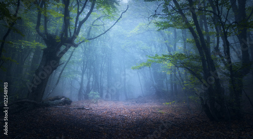 Fototapeten Wald Forest in fog. Fall woods. Enchanted autumn forest in fog in the morning. Old Tree. Landscape with trees, colorful green and red foliage and blue fog. Nature background. Dark foggy forest