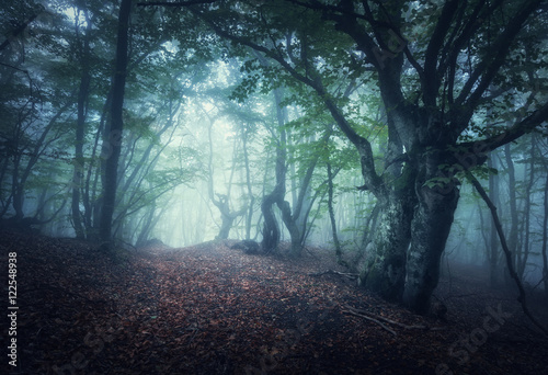 Fototapeten Wald Dark fog forest. Fall woods. Mystical autumn forest with trail in green fog. Old Tree. Beautiful landscape with trees, path, colorful orange and green foliage, fog. Nature background. Foggy forest