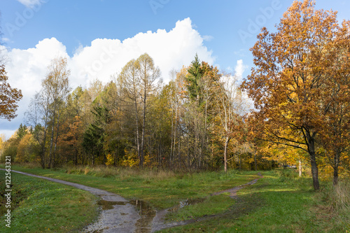 sunny weather after rain in the park Old park in the town of Pushkin, Russia autumn