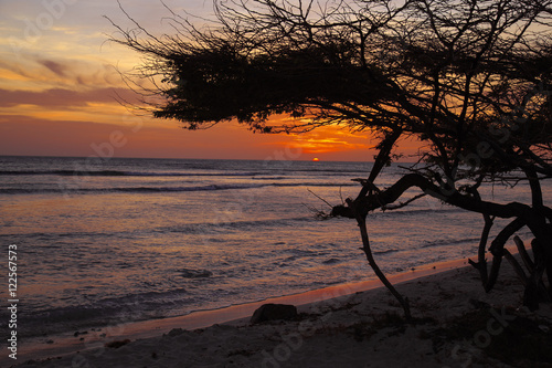 Aruban Sunset with Divi Divi Tree Poster