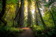 Sunlit Forest Trail
