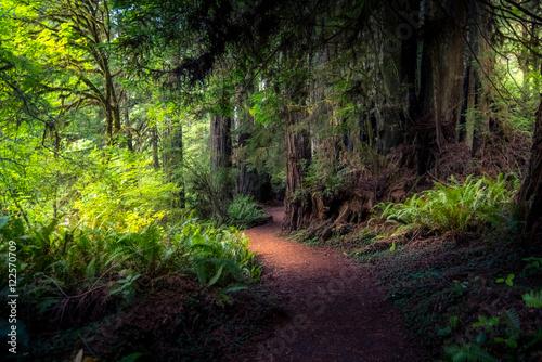 Fototapeten Wald Forest Path