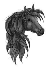 Sketch of black purebred horse head
