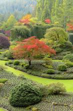 Fall Colour, The Sunken Garden,  Butchart Gardens, Brentwood Bay, Vancouver Island, British Columbia, Canada