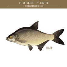 Bream. Food Fish