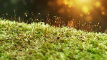 Macro Photo With Green Moss Background