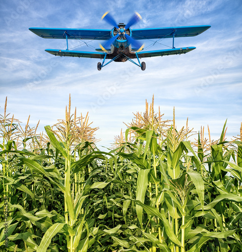 Fototapeta airplane over a maize filed