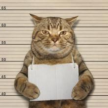 A Big Cat Was Arrested For Bad Behavior.