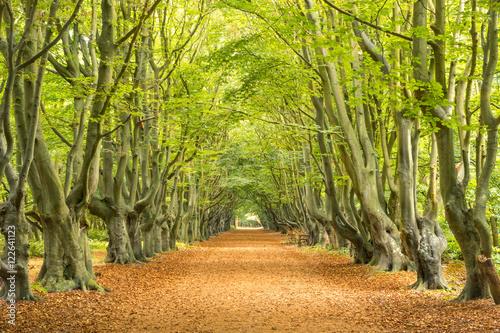Herbstliche Allee im Wald Canvas Print