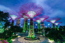 Futuristic View Of Amazing Illumination At Garden By The Bay In Singapore. Night Light Show At Supertree Groveis Is Main Marina Bay Sands District Tourist Attraction