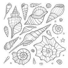 Set Of Hand Drawn Doodle Vector Seashells. Nature Sea Vector Set.