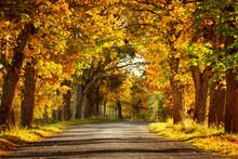 Asphalt Road With Beautiful Tr...