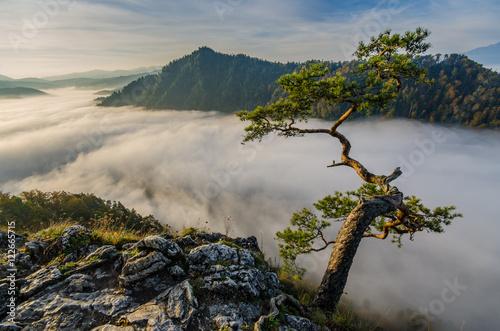 Obraz Poranne mgły i wschód słońca w Pieninach na Sokolicy . - fototapety do salonu