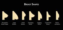 Shape The Breast. Vector Illus...