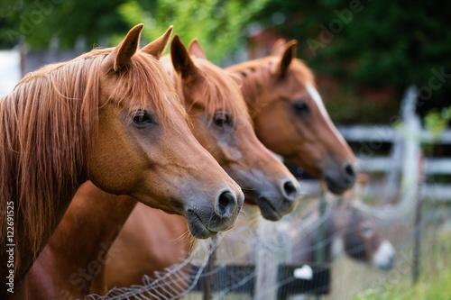 Photo  Horses