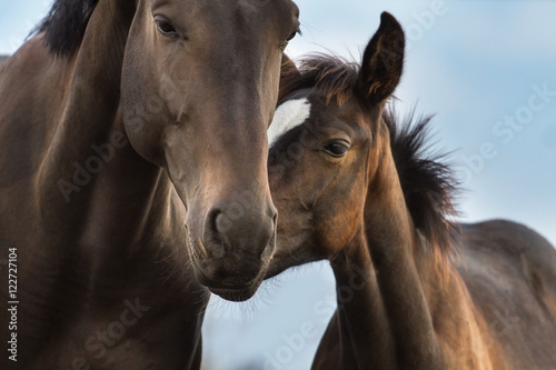 Valokuva Mare and foal close up portrait