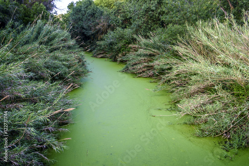 Valokuva  stagnant water in a river in the province of Barcelona