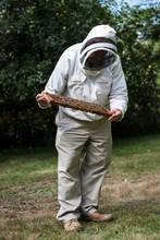 Beekeeper Examining Beehive In Apiary Garden