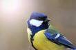bird hipster with sunny hotspot