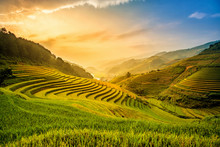 Beautiful Sunset On Terraced Rice Field In Harvest Season In Mu