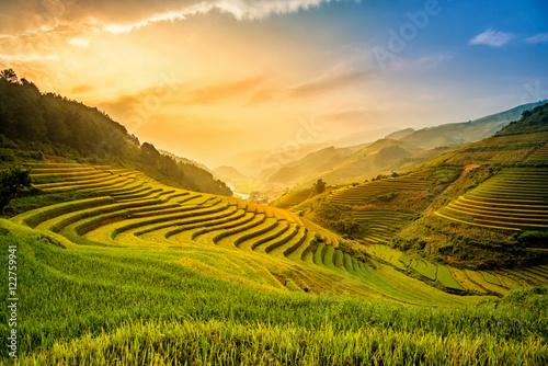 Obraz Piękny zachód słońca na tarasowym polu ryżu w sezonie zbiorów - fototapety do salonu