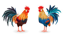Collection Of Detailed Lovely Roosters For Your Design