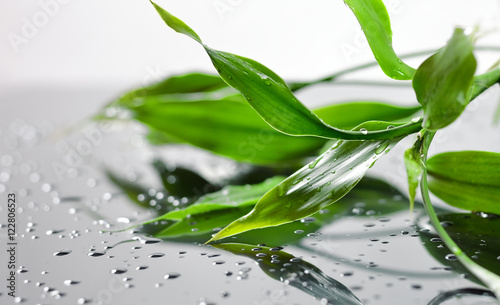 Fresh green wet bamboo leaves on grey glass
