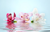beautiful romantic orchid flower background reflected in water