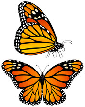 Vector Illustration Of Monarch...