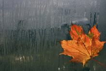 Autumn Maple Leaf On Wet Window