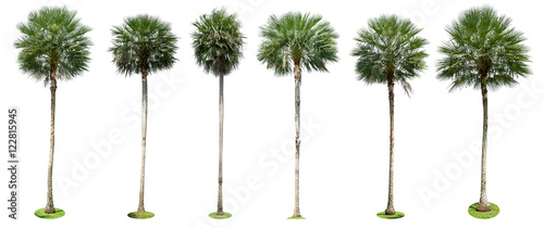 Canvas Prints Palm tree Palm trees isolated collection on white background