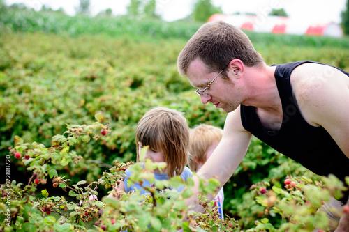 Photo  Man picking berries with children