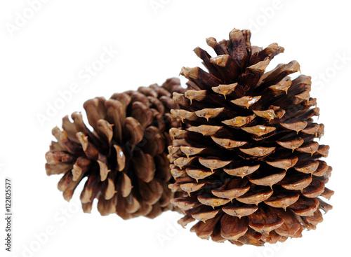 Fotografie, Obraz  two pine cone