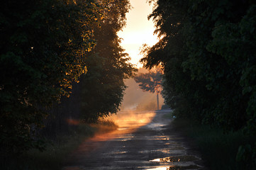 Zachód słońca pośród drzew u schyłku lata 2