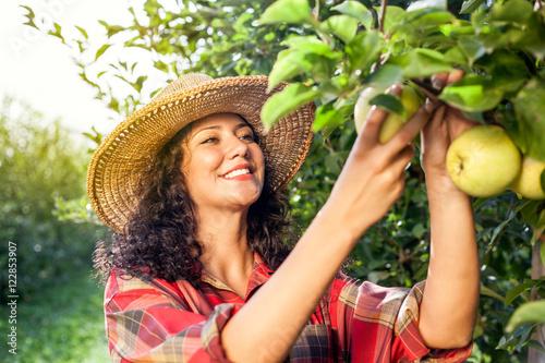 Beautiful young woman picking ripe organic apples Fototapeta