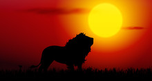 Lion On Sunset