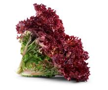 Vegetable Salad Lettuce Lollo ...