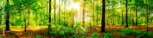 Fotobehang Bossen Wald Panorama mit Sonnenstrahlen im Herbst