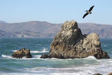 A Pelican Flying Over The Ocean Shore With Waves Crashing On The Rocks And A Mountain In The Distance.  Location Is San Francisco, California