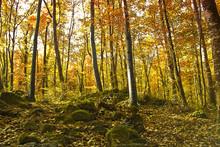 Autumn Forest. Park Road. Landscape With The Autumn Forest.