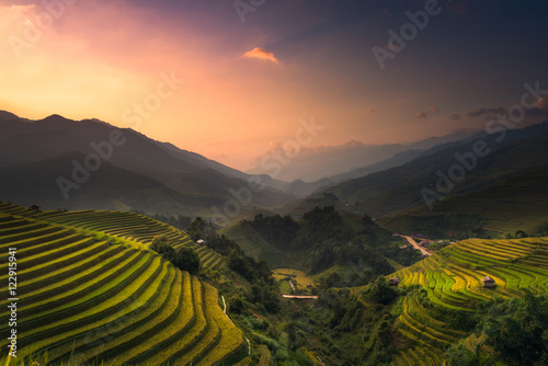 Poster Rijstvelden Terraced rice field landscape of Mu Cang Chai, Yenbai, Northern