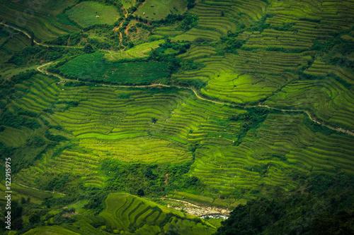 Fotobehang Rijstvelden Terraced rice field landscape of Mu Cang Chai, Yenbai, Northern