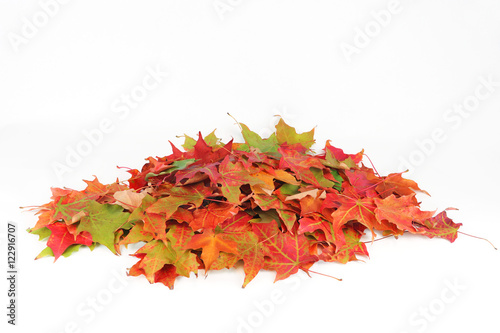 Fotografie, Obraz  colorful autumn leaves pile isolated on white background