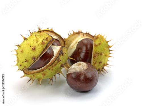 Kastanien, Rosskastanien, Aesculus hippocastanum