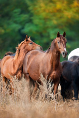 Red mare with foal on fall pasture