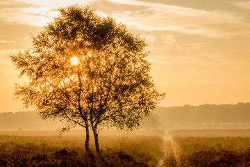 morning sun shining through a tree on the moor