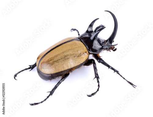 Big horned beetle on white background Poster